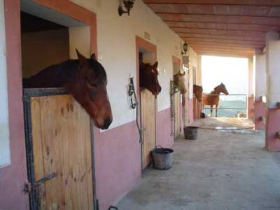 Casa Domingo Bed and Breakfast In Alora Málaga : Stables